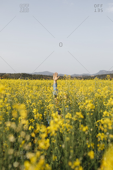 Spain- father and little son hiding in a rape field