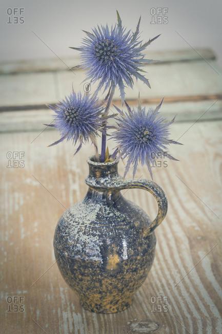 Blue Thistle in a vase