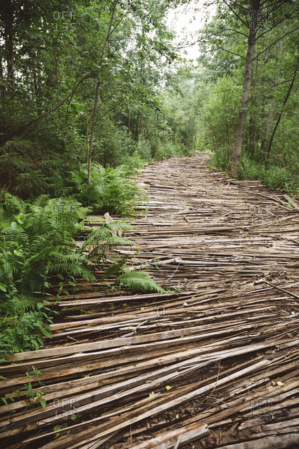 Russia- road with wood in forest