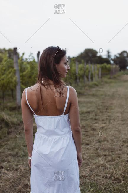 Woman wearing white summer dress- walking in vineyard- rear view