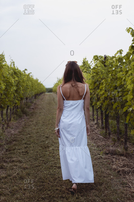 Woman wearing white summer dress- walking in vineyard- rear view