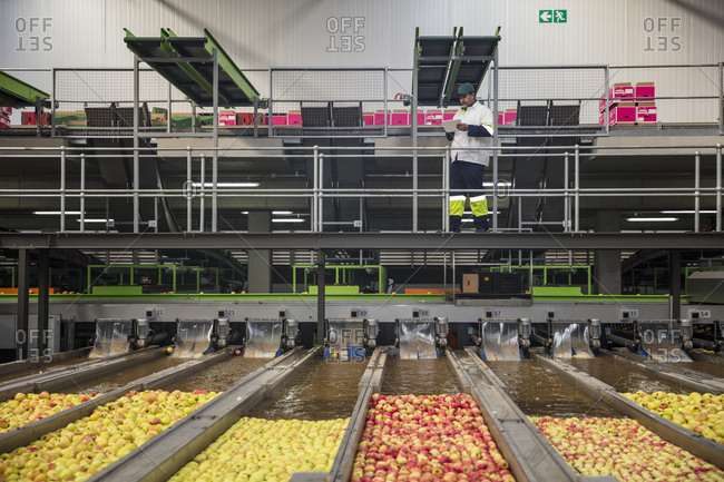 Worker checking apple washing process