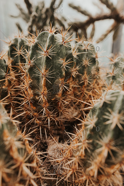 Close-up of cactus with spines