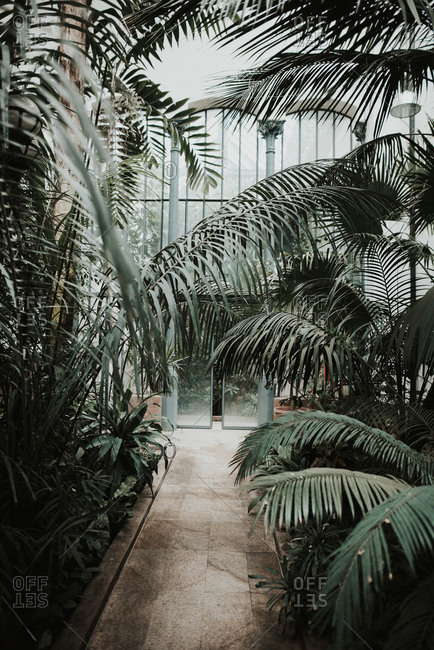 Palm trees growing in conservatory greenhouse