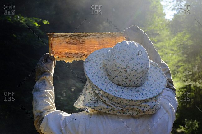 Back view of beekeeper holding up a frame from a beehive