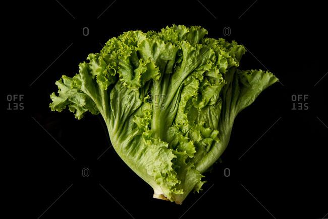 Fresh lettuce on black background