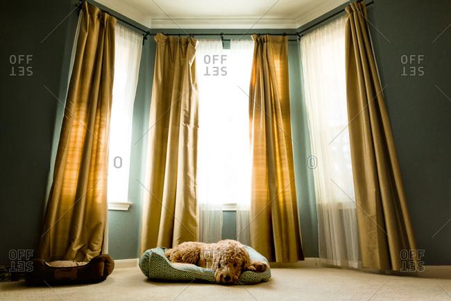 Dog sleeping on pet bed