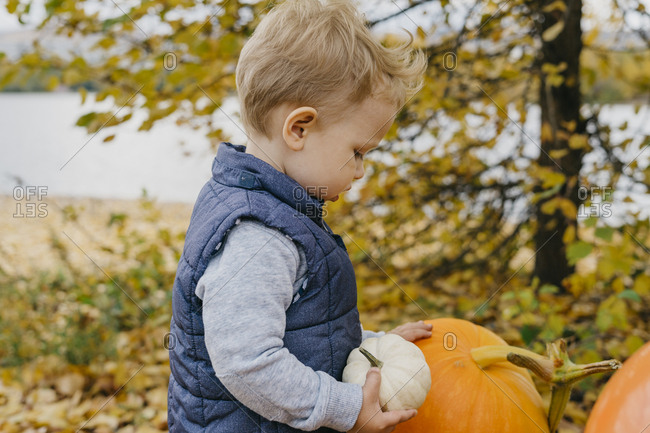 A 2-year-old boy holds a small white pumpkin with a large pumpkin near by