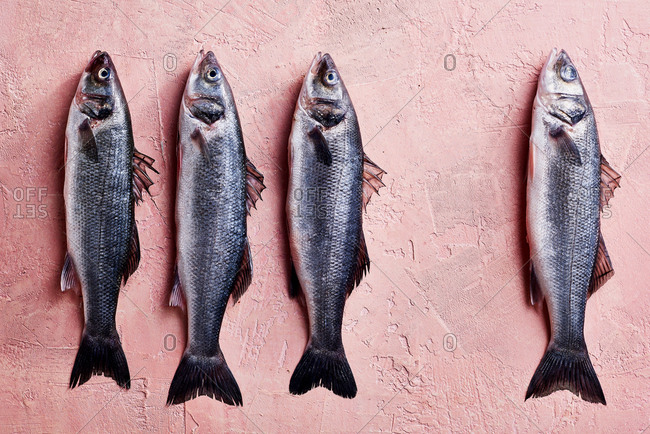 Four fish on a pink surface