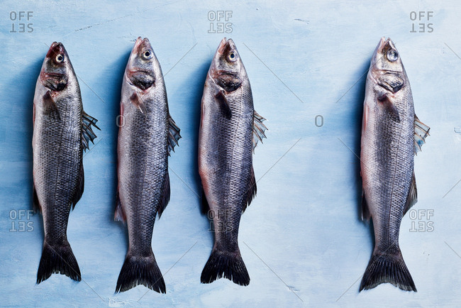 Four fish on a blue surface