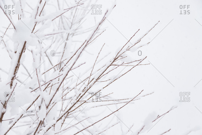 Close-up of snow covered bare tree branches on a winter day