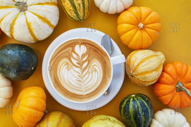 Latte served among mini pumpkins and gourds