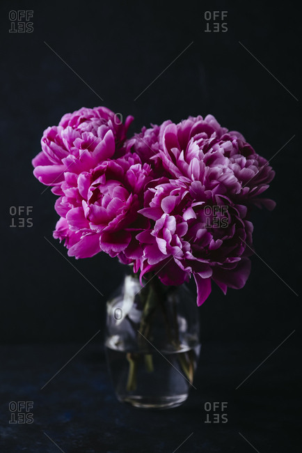 Still life of vase with pink peonies