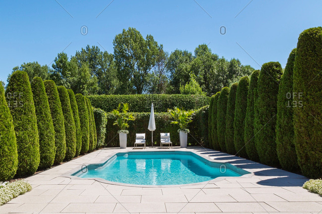 Outdoor swimming pool with parasol and lounge chairs, bordered by rows of cedar trees, in luxury residential backyard