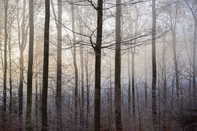 Forest in winter, Weibersbrunn, Spessart, Bavaria, Germany
