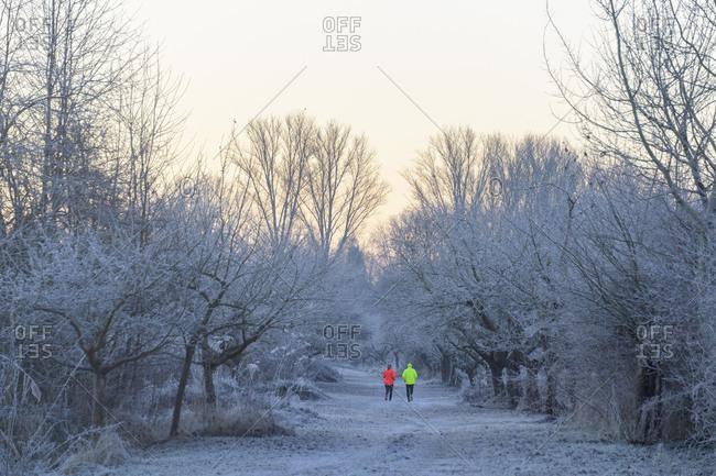 Two joggers in winter landscape, Reinheimer Teich, Reinheim, Hesse, Germany