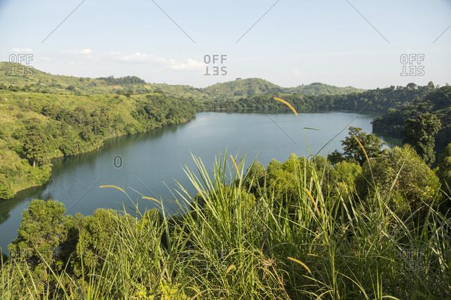 Grass Growing at Kazinga Channel Overlook in Queen Elizabeth National Park, Uganda, Africa