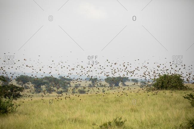 Migratory Birds Fly Over Refuge in Uganda