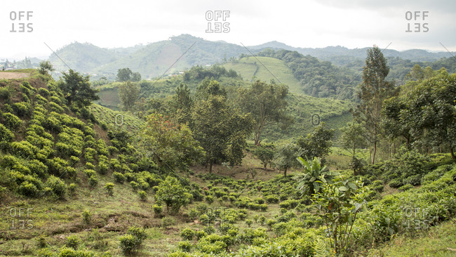 View of Green Forest and Hills in Uganda Refuge