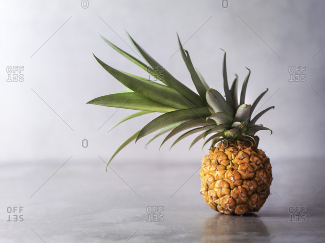 A tiny pineapple with it's crown tilted to the left.