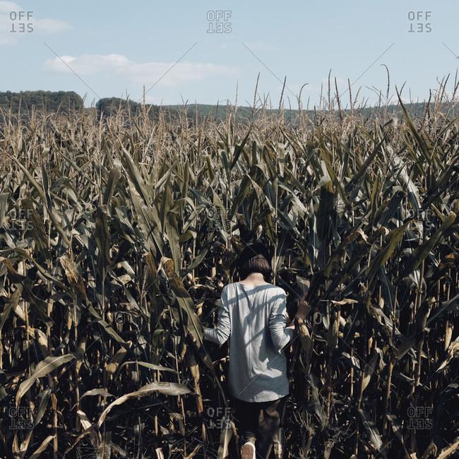 Rear view of woman walking in cornfield