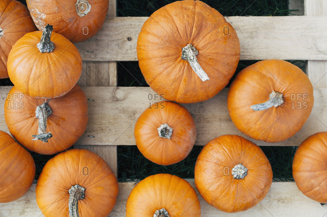 Overhead view of various sized pumpkins