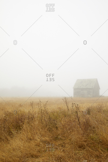 Old barn on coastal headlands on a foggy day