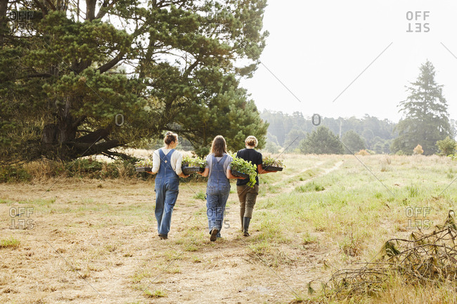Mendocino, California - July 31, 2017: Three girls carrying plants on a farm