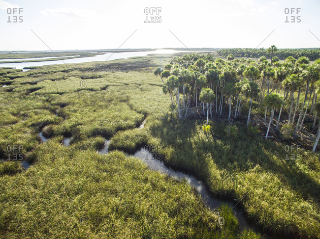 Tranquil view of trees in swamp at Chassahowitzka Wildlife Refuge