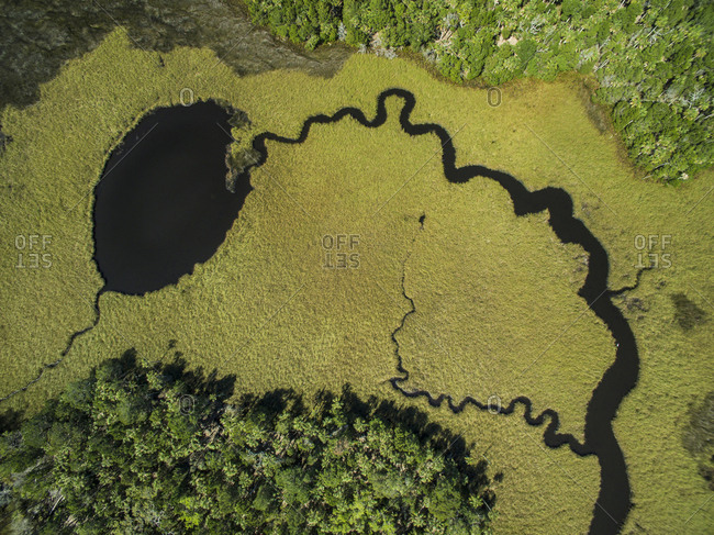 High angle view of algae in swamp at Chassahowitzka Wildlife Refuge