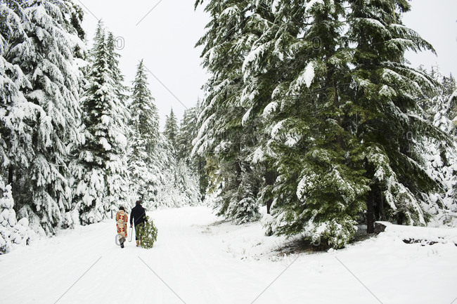 Rear view of couple with pine tree walking on snow covered field in forest