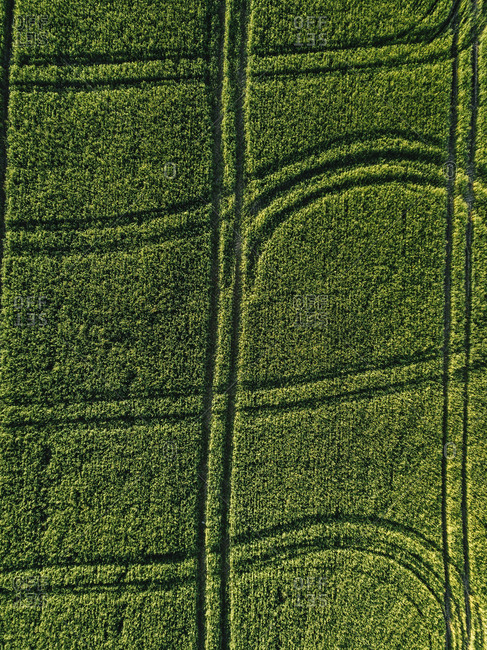 Aerial view of lush agricultural field during sunny day
