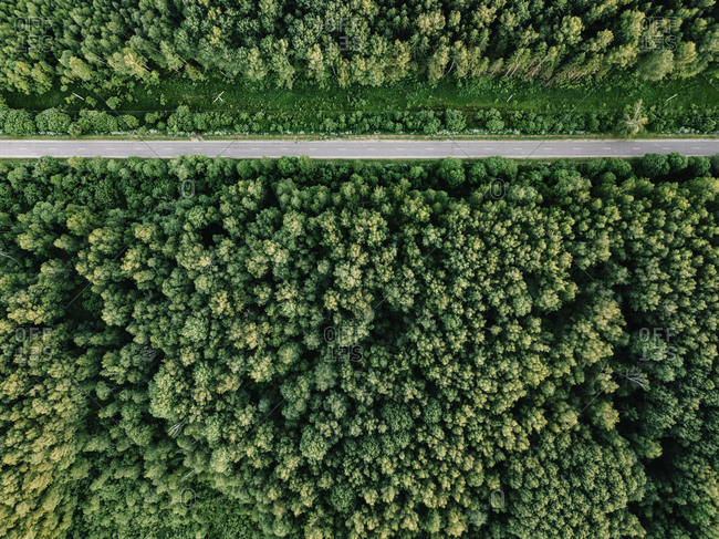 Aerial view of empty road amidst trees growing in forest at Russia