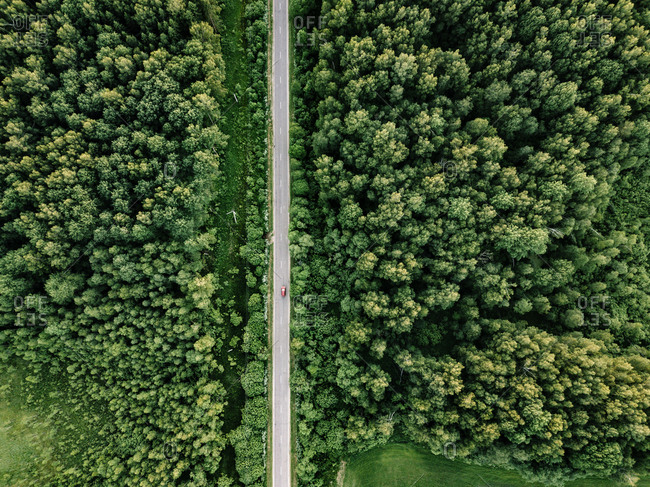 Aerial view of road amidst trees growing in forest