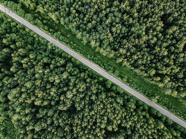 Aerial view of empty road amidst trees growing in woodland