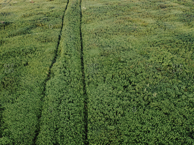 Aerial view of plants growing on agricultural field
