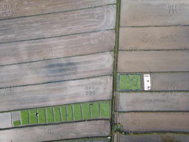 Aerial view of agricultural field at Bali