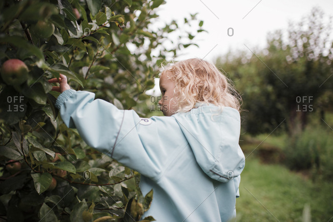 Side view of girl wearing raincoat picking apples from fruit tree at orchard