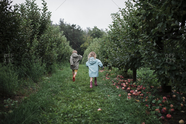 Rear view of playful siblings running amidst fruit trees at apple orchard