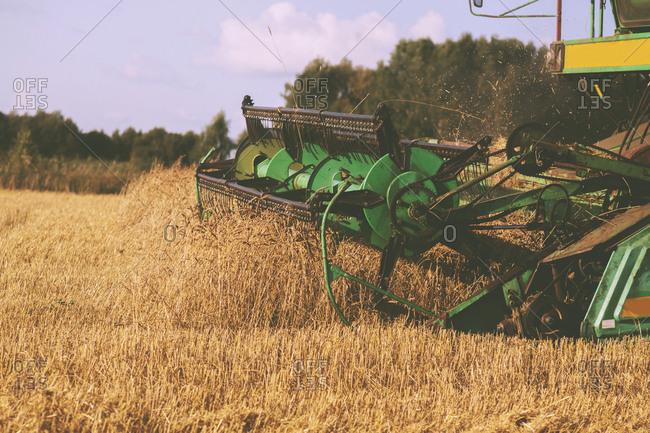 Combine harvesting wheat fields