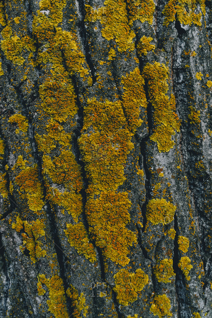 Yellow fungus on a tree trunk in autumn