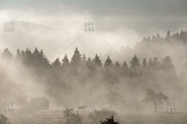Horse ranch in foggy forest in Germany