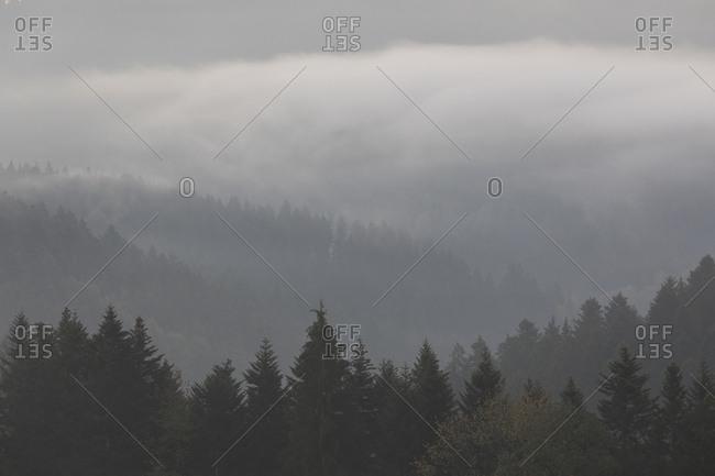 Foggy forest in Alpirsbach, Germany