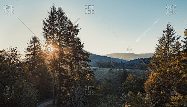 Sunrise over hilly forest