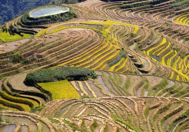 Rice terraces at Ping An (Longshang), Guangxi Provence, China