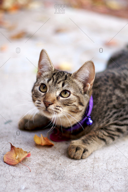 Tabby cat by leaves