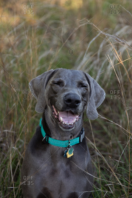 Happy (No Suggestions) dog in tall grass