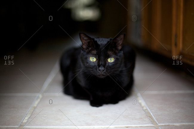 Black cat on kitchen floor