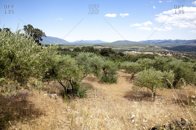 Gredos mountains landscape and olive trees in Casavieja, Avila, Spain