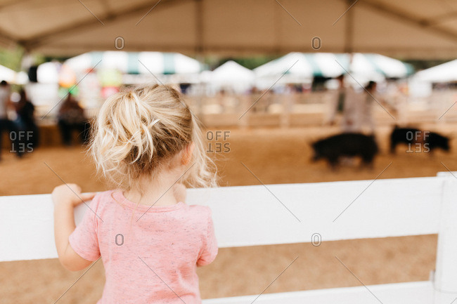 Little girl watching pigs at a county fair